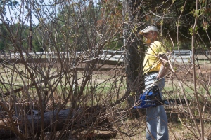 Monte cleared trees and brush.  Monte and Kay Lewis are Community Gardeners this year.