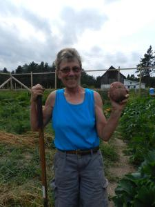 Barb Larson, a volunteer in the Growing Together Garden, harvesting potatoes for the Cable Area Food Shelf