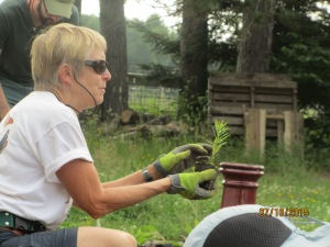 Sarah Boles, of Northern Native Plantscapes, led a hands-on workshop to help us install a native plant pollinator garden.